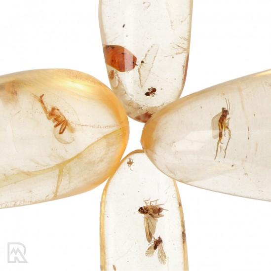 Copal met Insecten