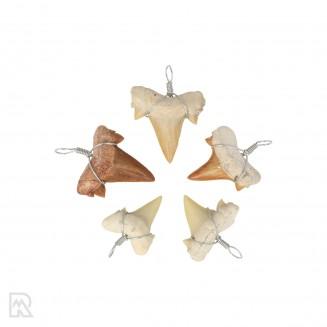 Fossiele Haaientand Hanger 2 cm