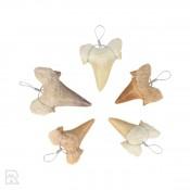 Fossiele Haaientand Hanger 3 cm