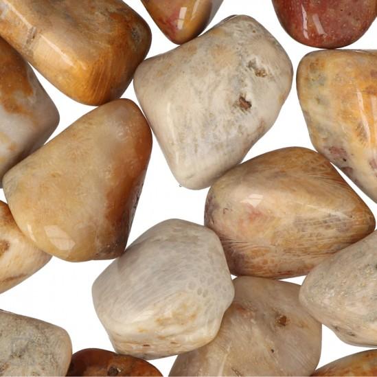 Fossiel Koraal Trommelstenen